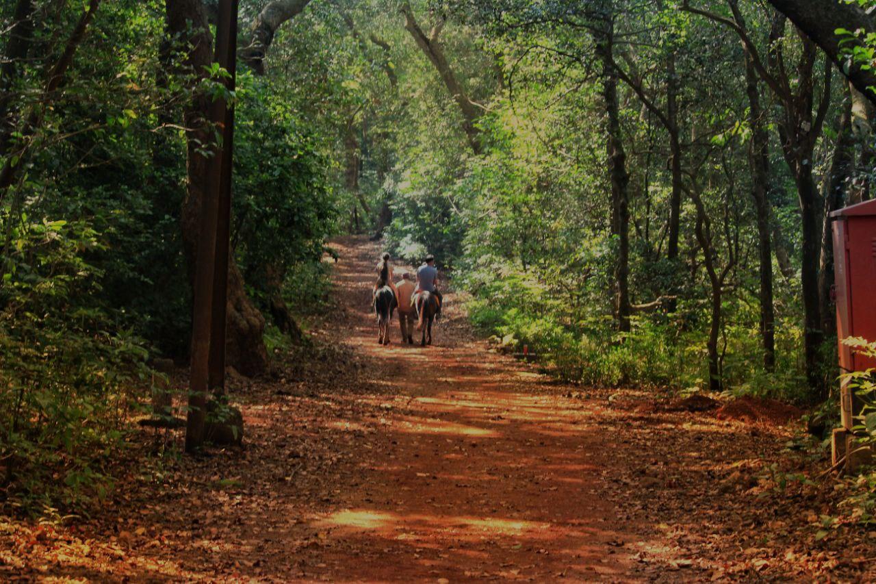 Matheran Forest